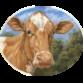 High View Farm Raw Milk